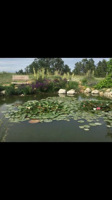 Lilly Pond - Copy