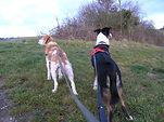 Promenades chiens, Yonne (89)