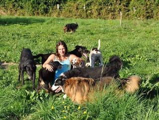 Hiérarchie ou collaboration: comment fonctionne un groupe de chiens?