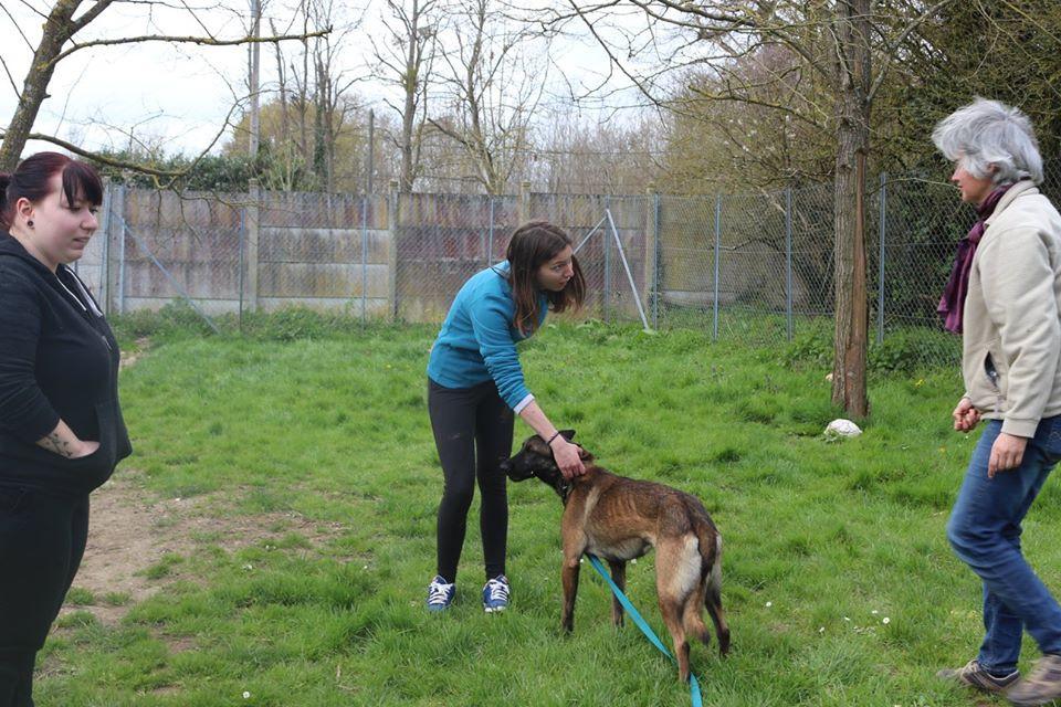 Education canine au refuge SPA de Nailly