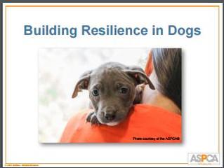 Améliorer la résilience du chien: une conférence de Patricia Mc Connell