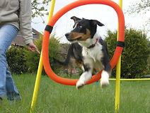 Initiation agility chien, Yonne (89)