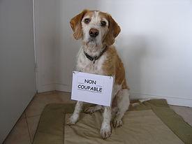 Eduquer son chien, Yonne (89)