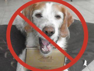 Pâques: petit rappel sur la toxicité du chocolat pour le chien
