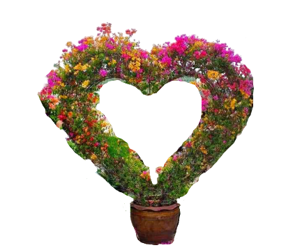 Bougainvillea heart shape