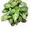 Thumbnail: Syngonium (20-30cm)