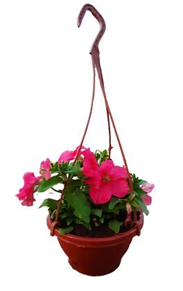 Hanging Putunia Red
