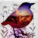 _Sea Bird, see_ #layeredphotography #bir