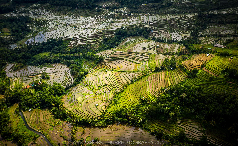Jatiluweh - Bali