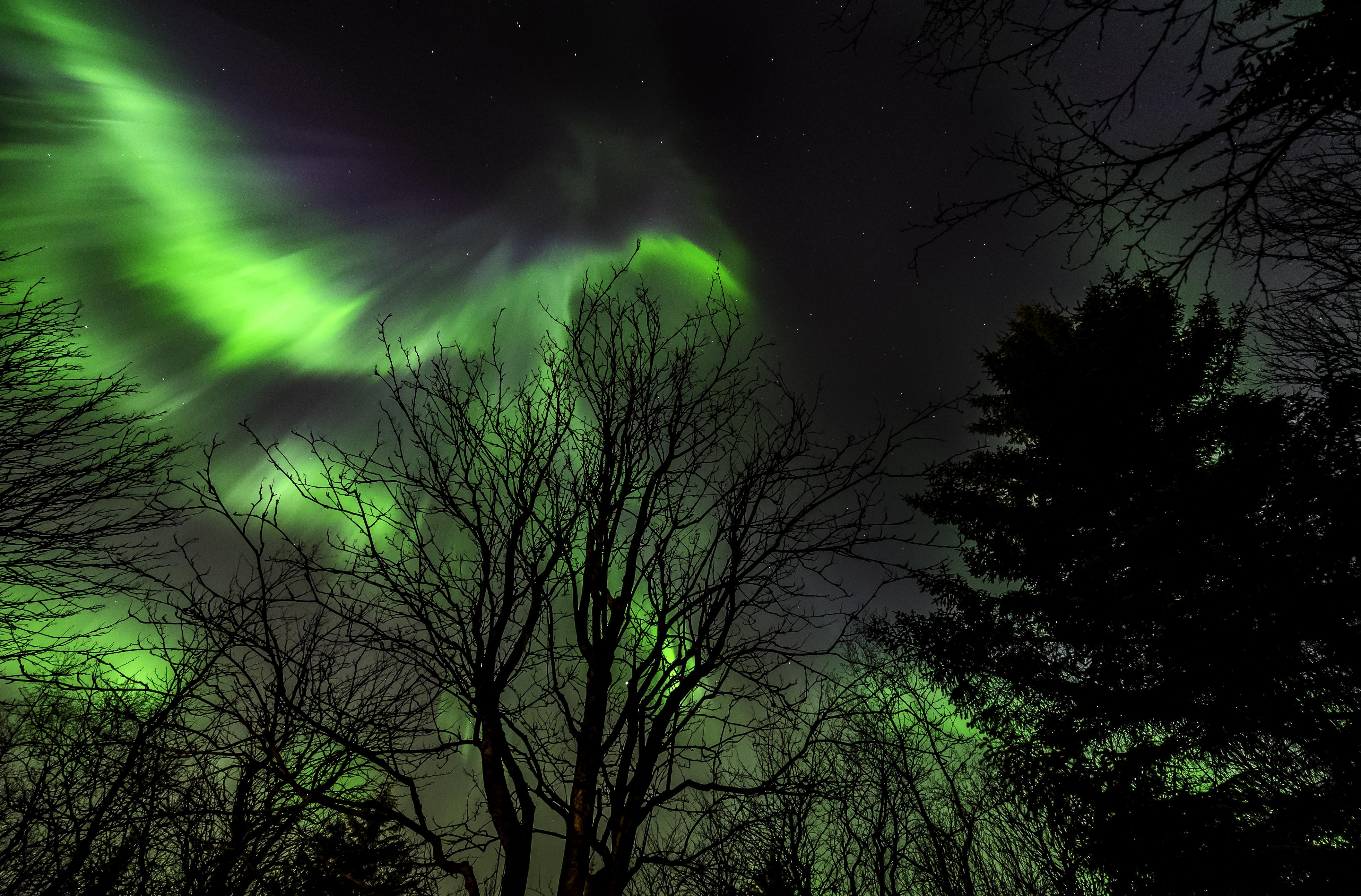 Aurora Eagle