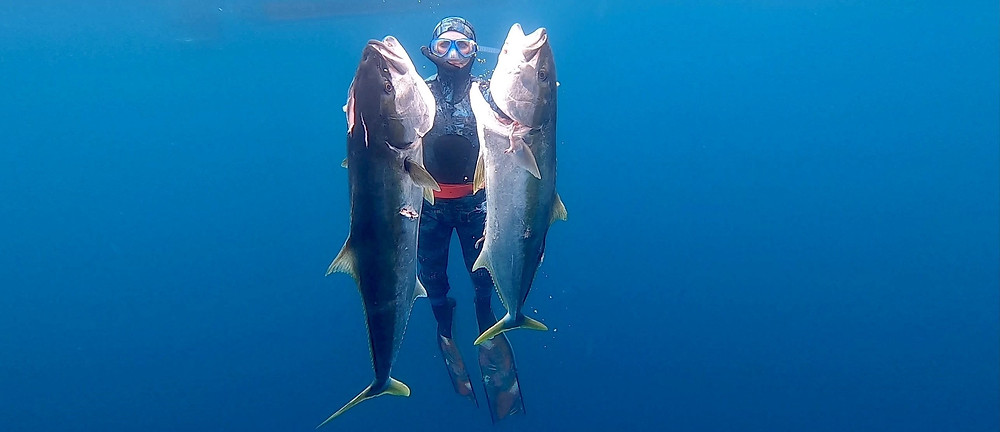 woman in wetsuit hold two large speared kingfish underwater
