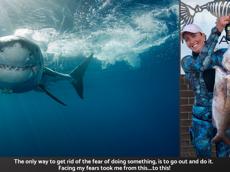 Feedback and our local Great White Shark.