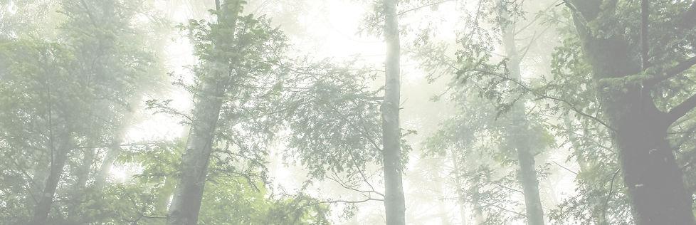 Foggy Forest_edited_edited.jpg