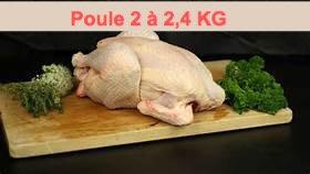 Poule PAC 2 à 2,4 Kg