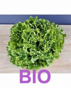 Salade BATAVIA  BIO