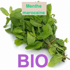 Menthe Marocaine BIO