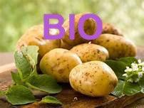 Pomme de terre nouvelle BIO