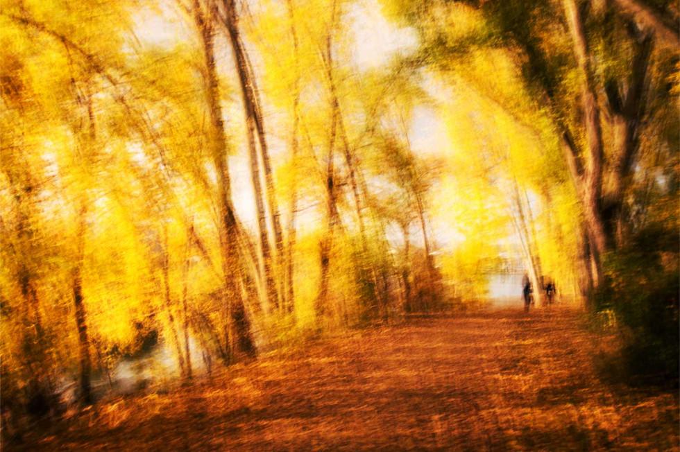 Herbstliche Franziska-Retzinger-Promenade auf der Maaraue