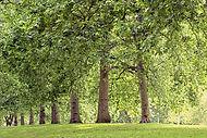 Tree%2520Lined%2520Park_edited_edited.jp