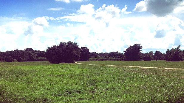 Wild Labyrinth
