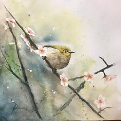 < Murmur of Plum Blossom >