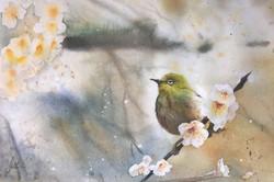 < Murmur of Cherry Blossom >