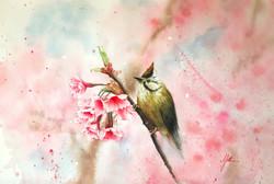 < Murmur of Sakura >