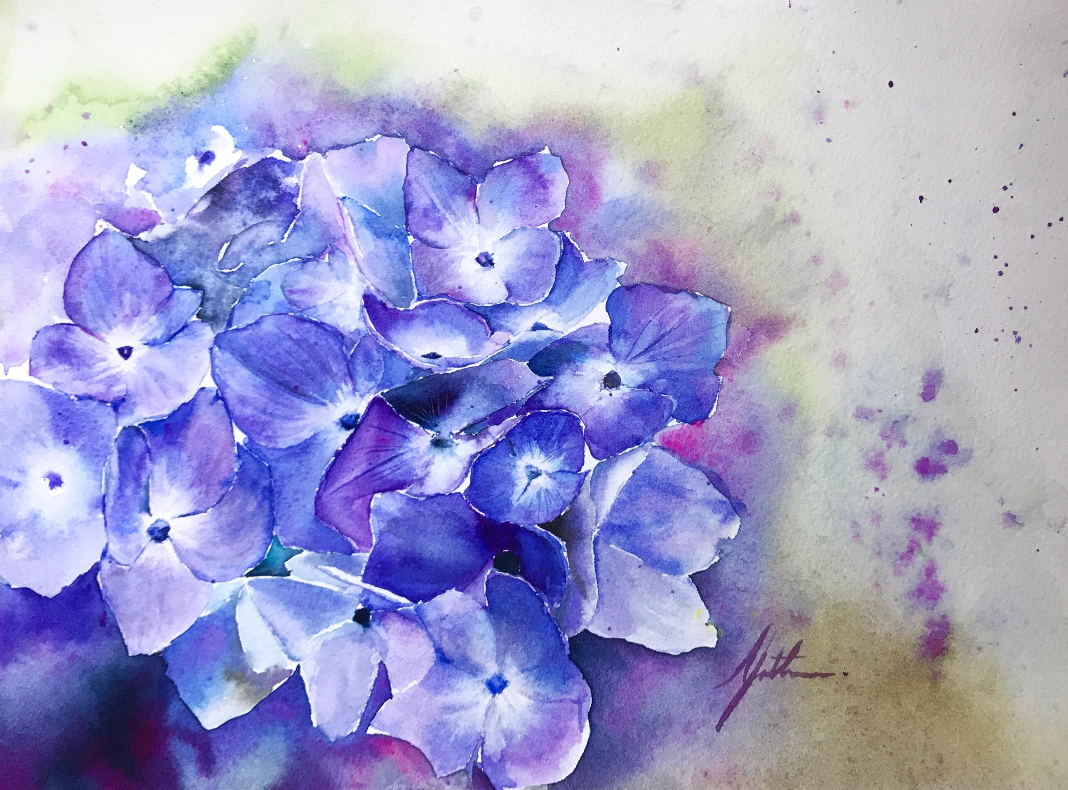 Murmur of Hydrangea -- The Violet
