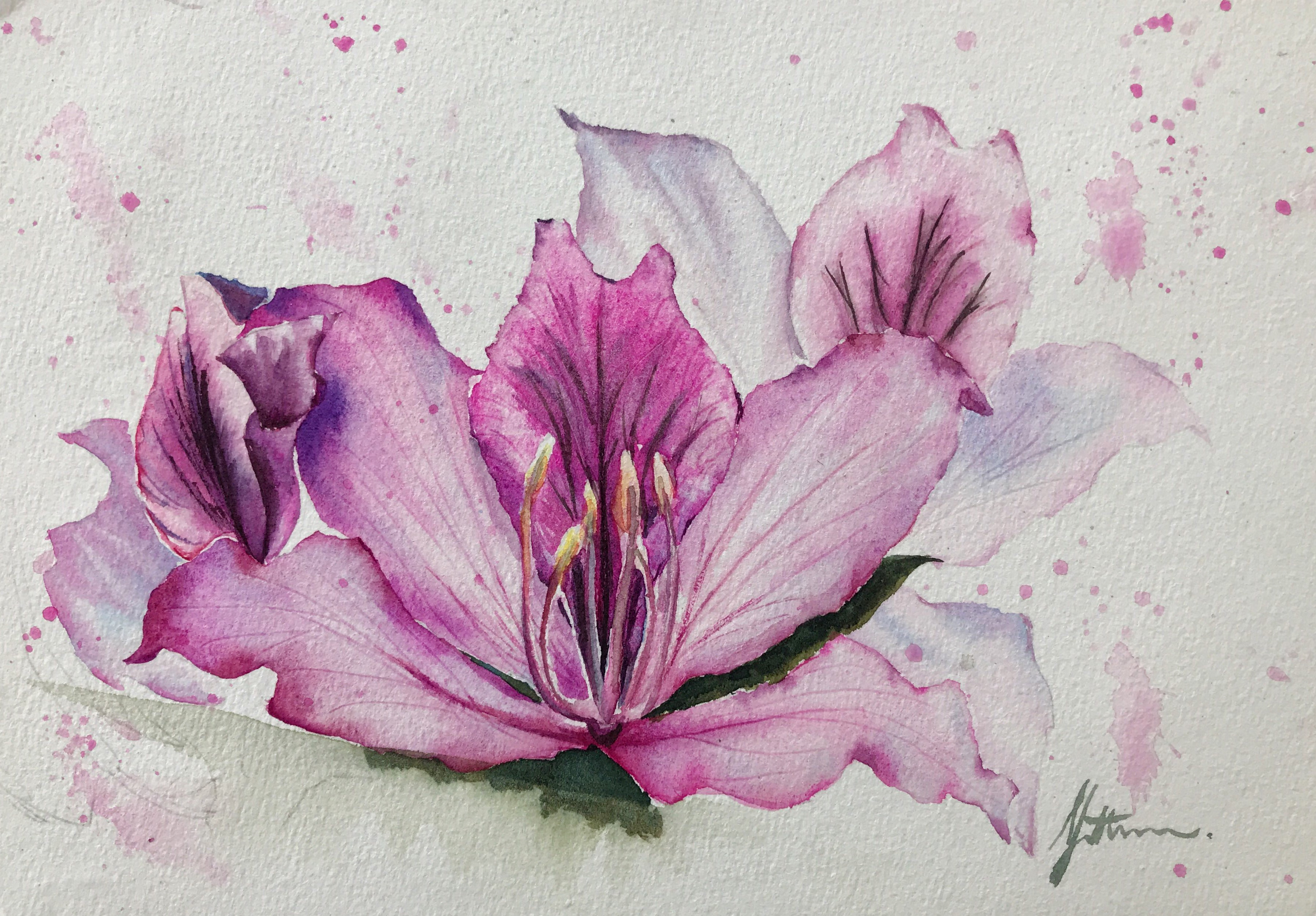 < Flower of Hong Kong -- Bauhinia >