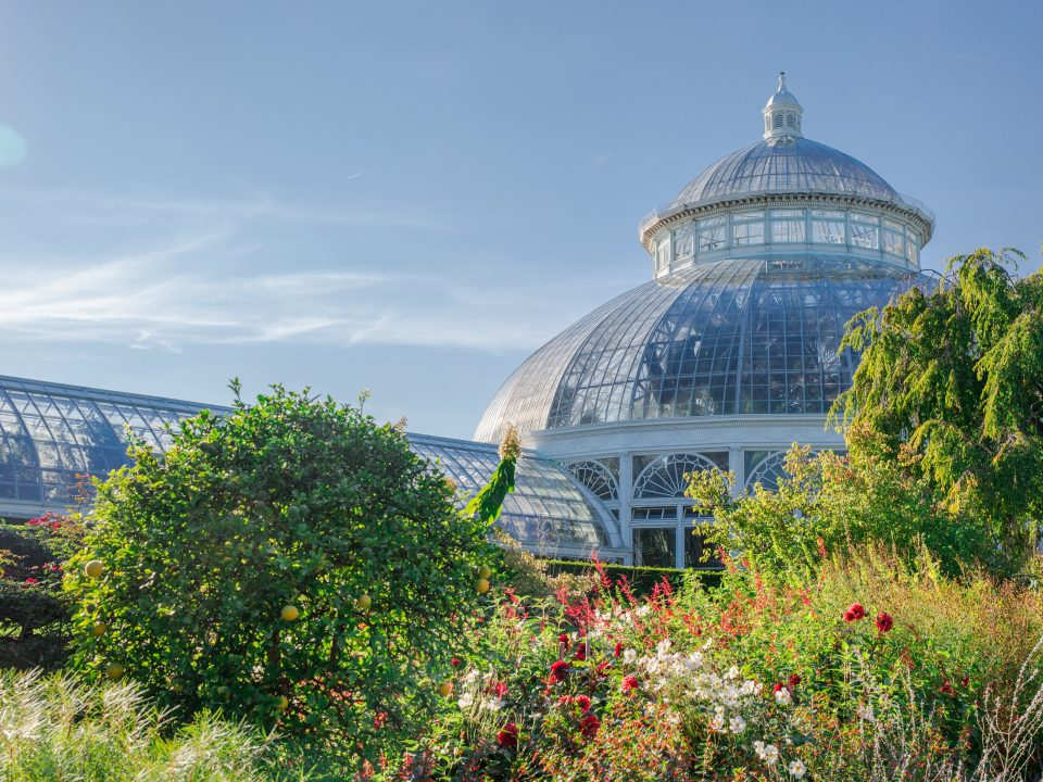 Courtesy : New York Botanical Garden