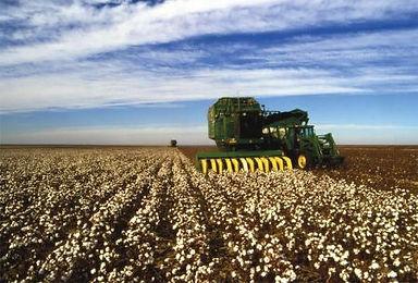 pcca-cotton-harvest_orig.jpg