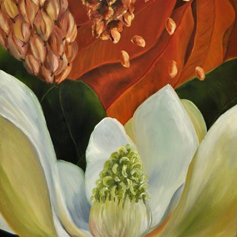 Magnolia IV