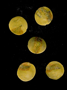 Captura de pantalla 2021-05-06 a la(s) 1
