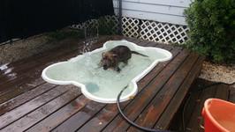 Fun in the rain. In the pool.
