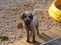 Mud Puppy!
