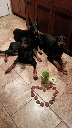 Dobergirls approved cookies