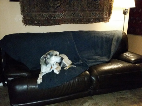 Humboldt - dogs are allowed on the sofa :-)