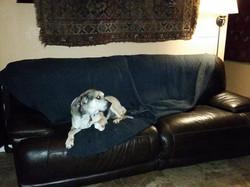 sofa lounging allowed