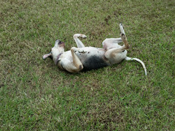 Rolling in the grass feels so good,
