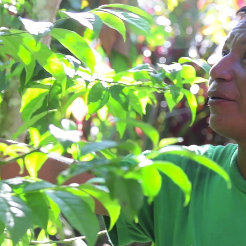 Roberto y su planta de guayusa