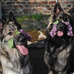 Les filles et le printemps