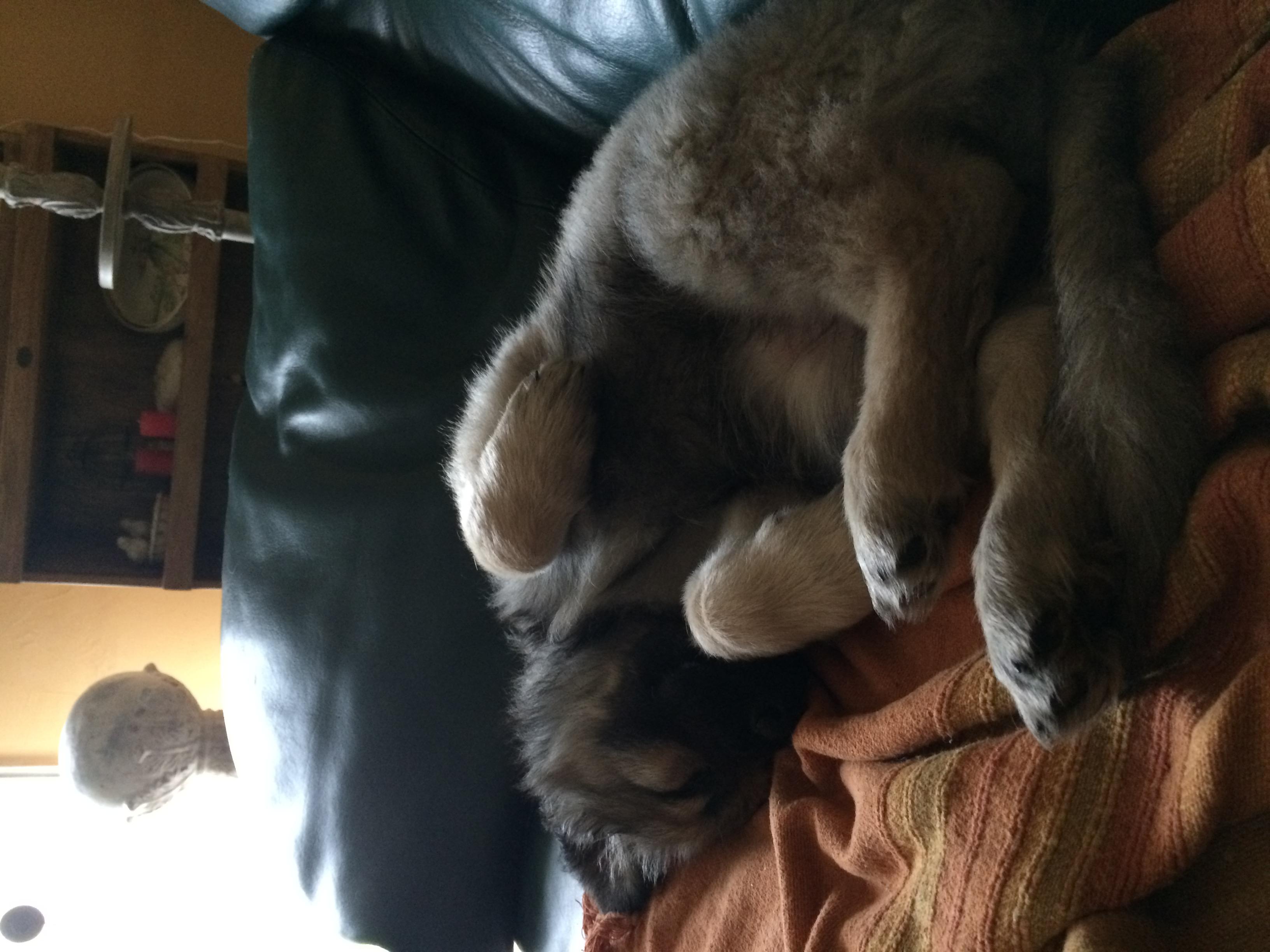 Dur dur la vie de bébé chien