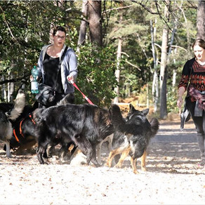 Balade à Fontainebleau