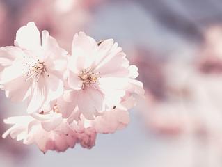 Couleur Rose Pâle : Visualisations