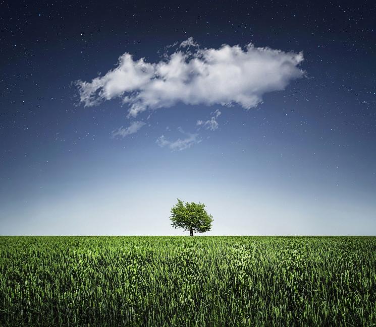 L'arbre de notre vie
