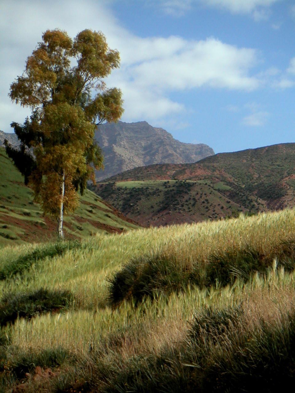 Vallée de L'ourika