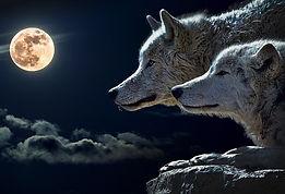 parabole,loup,colère,colere,harmonie,sentiment,esprit