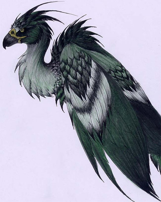 Augurey Tail-Feathers