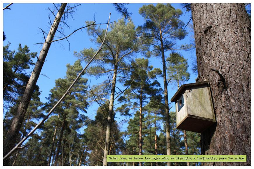 Elaboramos cajas nido y comederos