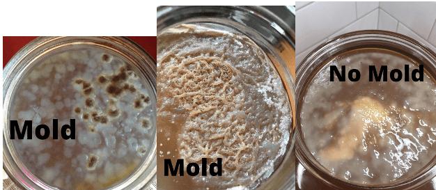 Kombucha SCOBY Mold